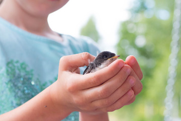 litlle swallow holding in kids hands closeup against green and blue background