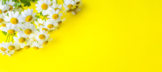 Chamomile flowers on yellow background