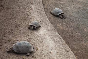 Tortoise Nursery