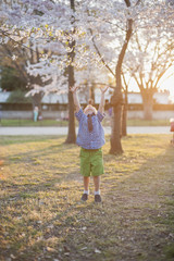 Young Toddler Boy Reaching For A Cherry Blossom