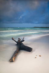 Trunk shipwrecked on a Caribbean beach