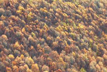 Aerial view of forest in fall
