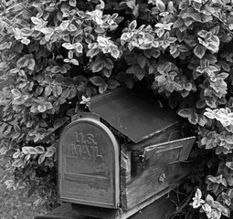 Mailbox in a Bush