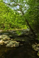 Tellico River, TN
