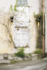 Blurred image of red rose climbing on building and framing a window