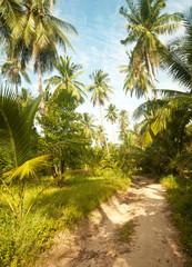 Dirt Road on Koh Phangan Island, Thailand