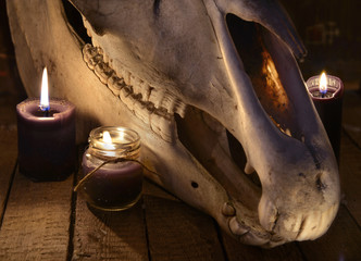 Close up with evil horse skull and two black candles. Mystic Halloween still life