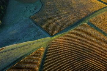 Aerial view of vineyard in fall