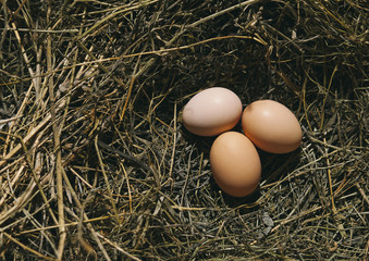 three eggs in the nest