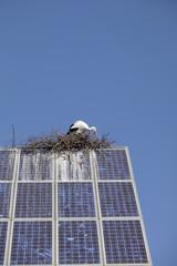 Stork building a nest on a big solar panel