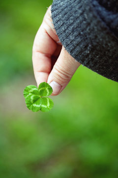 Clover in hand with blurred grass on background