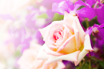 Yellow Rose Flower In The Garden With Bokeh Light, Bouquet Of Fresh Spring Yellow Rose And Purple Flowers Bokeh For Background.