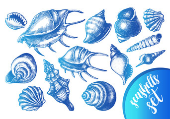 Ink hand drawn set of different types mollusk sea shells. Marine elements collection for design, Template for cards, banners, posters. Vector illustration.