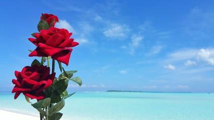 P00825 Maldives white sandy beach red rose flower on sunny tropical paradise island with aqua blue sky sea ocean 4k