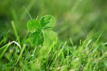 Four leaf clover in green meadow, symbol for luck and fortune, closeup with copy space