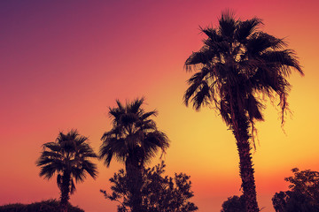 Silhouette of palm trees against pink dawn sky
