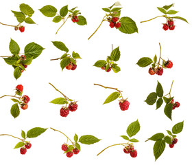 Ripe raspberries with green leaves on a branch. Isolated on white background. Large set
