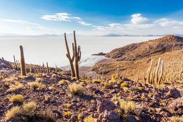 Fototapete - Huge cactuses Salar De Uyuni islands mountains scenic landscape