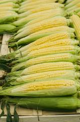 Fresh organic corn on a market