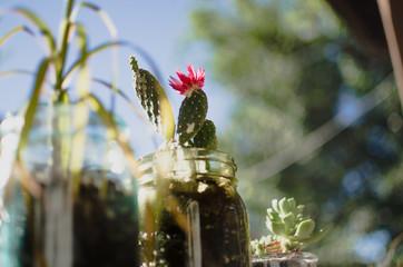 Plants in Mason Jars