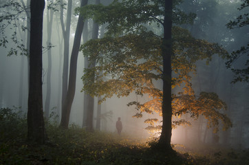 Mysterious forest with man standing near enchanted tree with light