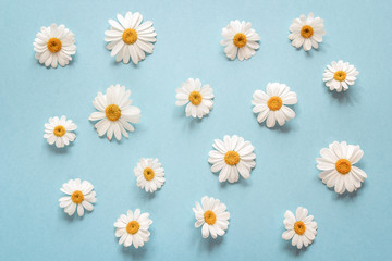 Floral camomile pattern on a blue background.