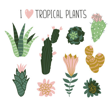 Collection of tropical plants, cactuses, succulents, flowers. Vector elements for stylish design cards, posters, web.