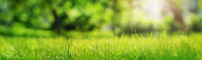 Papiers peints Herbe Fresh green grass background in sunny summer day