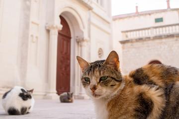 Katze in Dubrovniks Altstadt