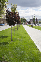 City street sidewalk alley with grass and trees. background, city, nature