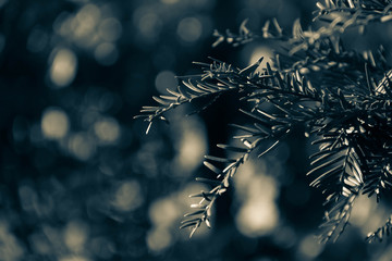 Green pine branches with blurred background in vintage style