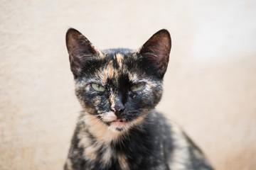 Brindle cat looking