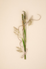 Dry stems of plants and a natural jute rope on a light pastel background..