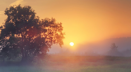Canvas Prints Sunset Misty summer sunrise