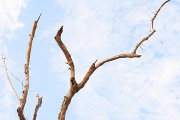 Branch of dead tree in the sky
