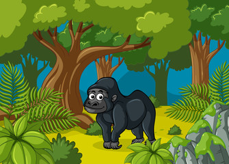 Gorilla living in deep forest