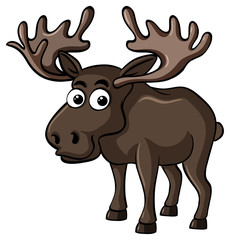 Brown moose on white background