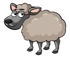 Sheep with sleepy eyes