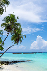 Tropical pristine beach with coconut palms