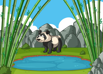 Panda stands by the pond