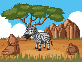 Zebra standing in the field