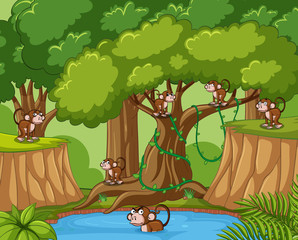 Many monkeys in the forest