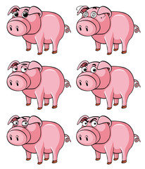 Pig with different facial expressions