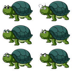 Turtle with different facial expressions