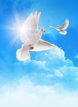 White doves in blue sky