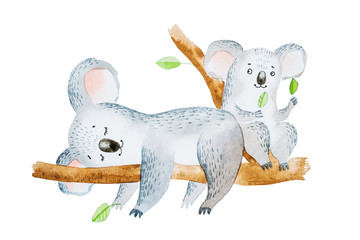 Watercolor illustration of two adorable cartoon koala bears sitting on eucalyptus tree branch