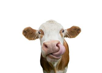 La pose en embrasure Vache Freigestellte Kuh mit Zunge in der Nase