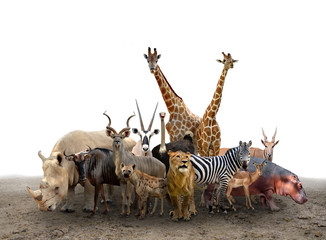 group of africa animals Wall mural