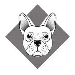 French bulldog head isolated on white background. line tattoo design animal head. Vector illustration.