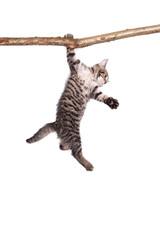 Katzenbaby hängt an Ast